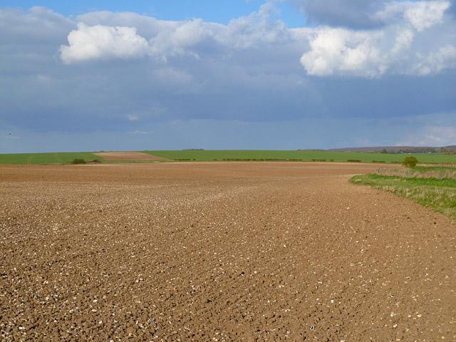 Farmland, Collingbourne Ducis