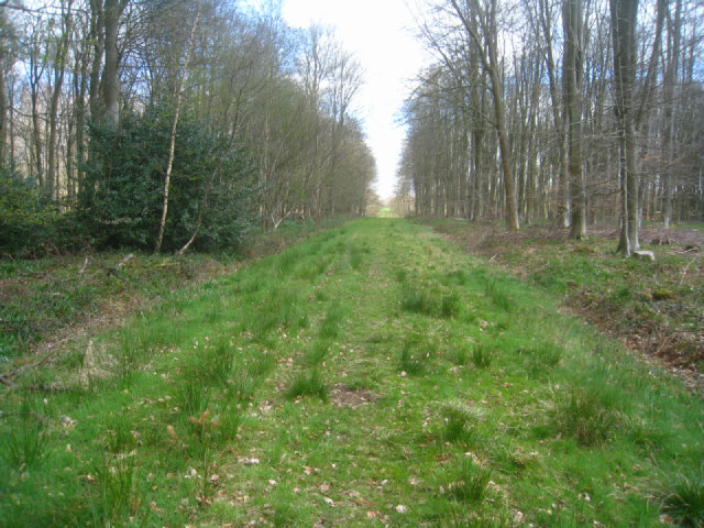 Broad woodland track - Micheldever Wood