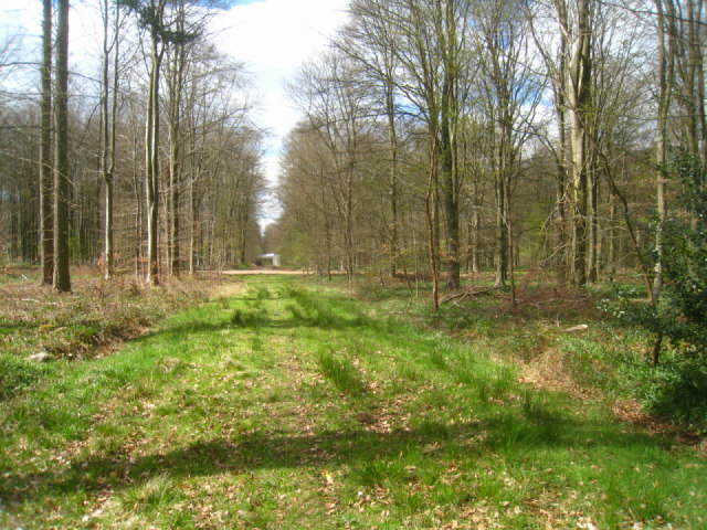 Micheldever Wood
