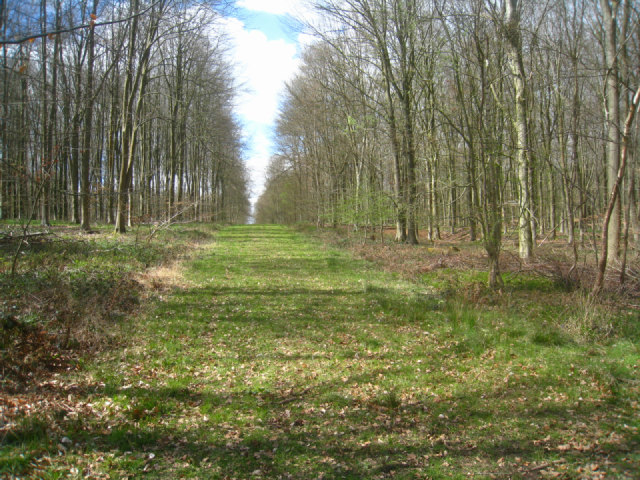 Fire break / woodland track