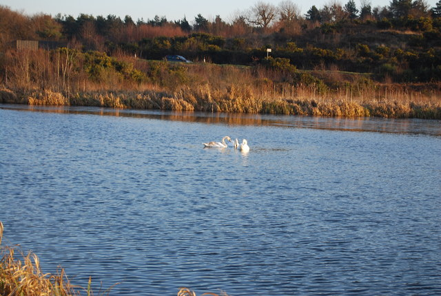Swans, Eelmoor Flash