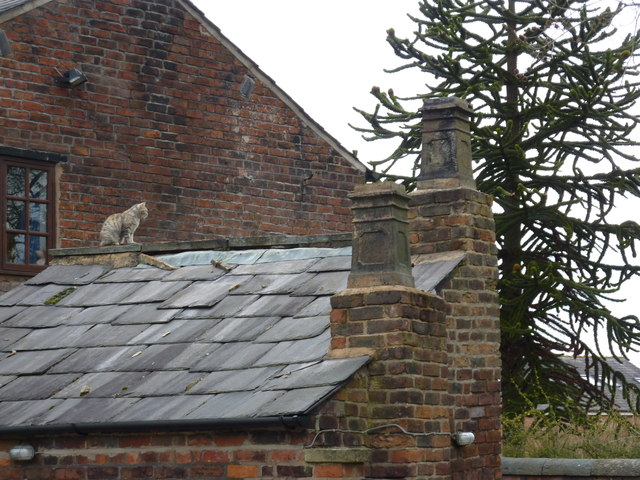 Cat on a roof, cottages on Prince's Incline