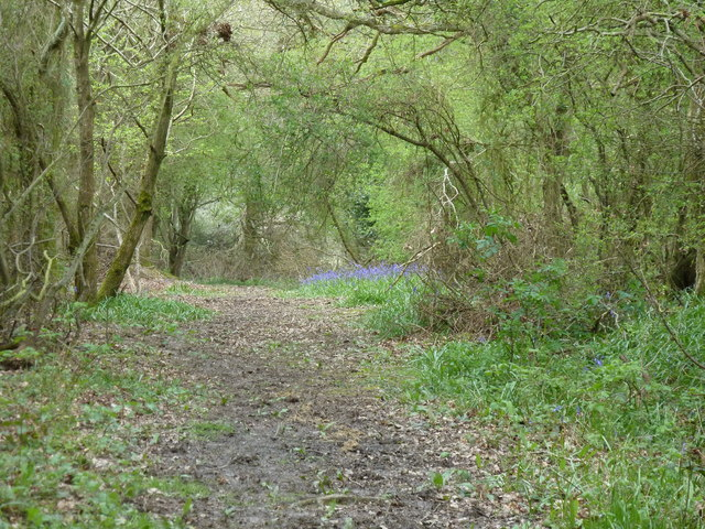 Bridleway and Bluebells in Eleven Acre Wood