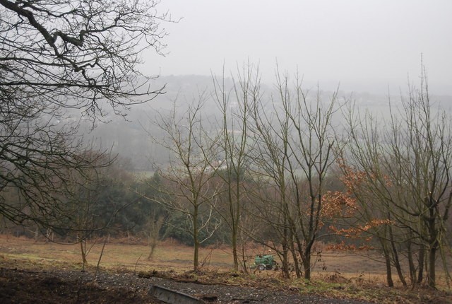 View to Mallydams Wood