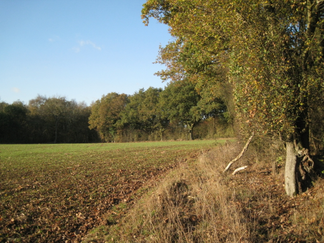Woodland enclosing the end of a field