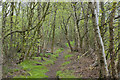 SJ7097 : It looks like a walk in the woods but the trees just fringe the path by Ian Greig