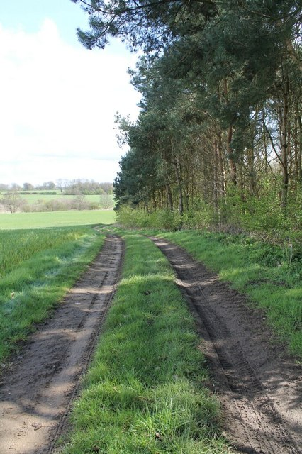 Track at edge of Fairy Wood