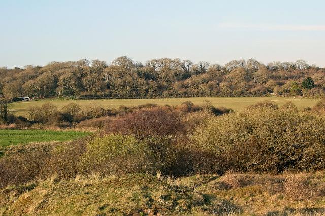 View towards ancient woodland, Y Graig