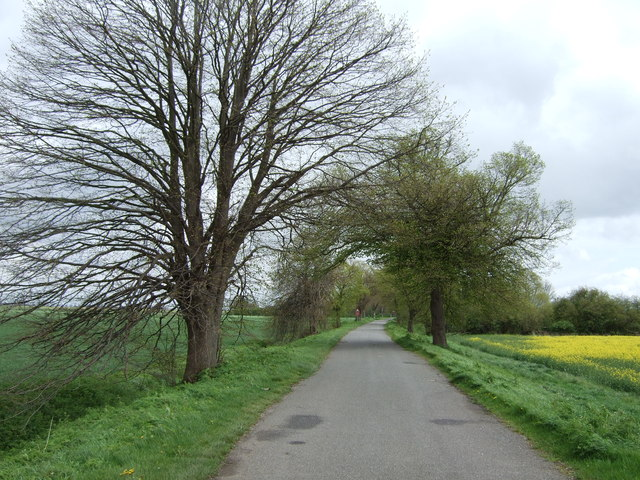 Thorney Dyke heading east