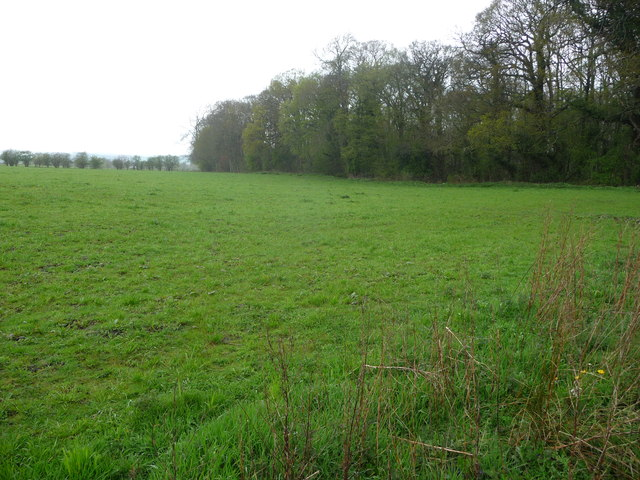 Fields and wood near Babbinswood Farm