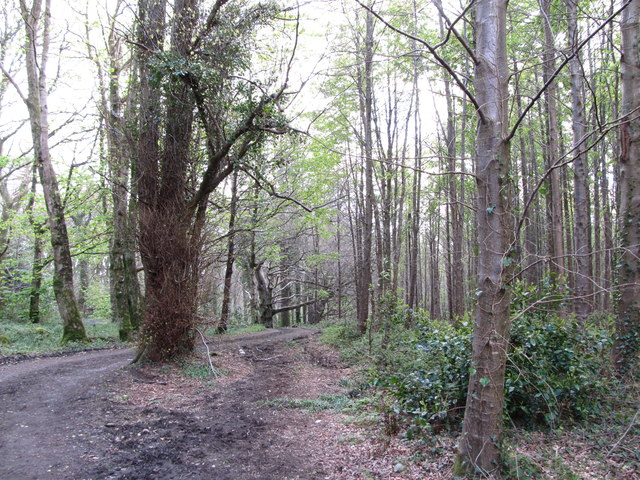 Path descending through woodland at the Castlewellan Forest Park
