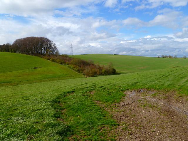Pasture, Grafton