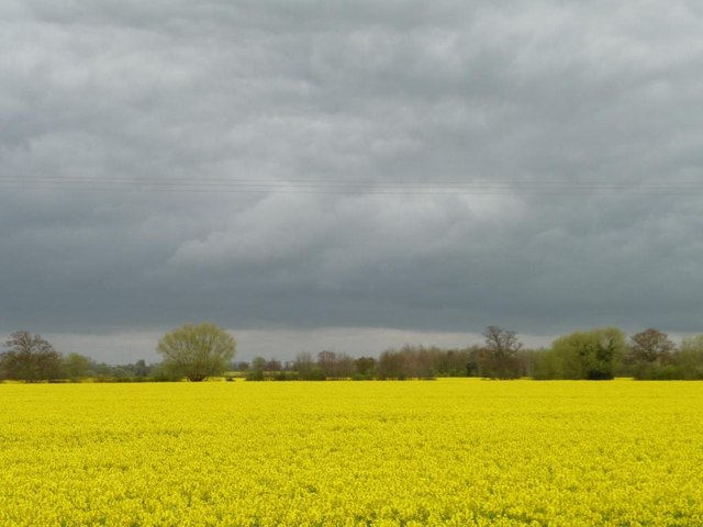 Yellow field, grey sky, Orgreave in April