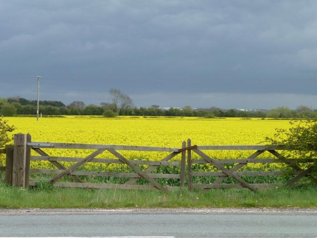 Double gate into oilseed rape field