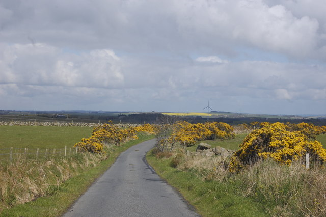 Single-track Road with Gorse