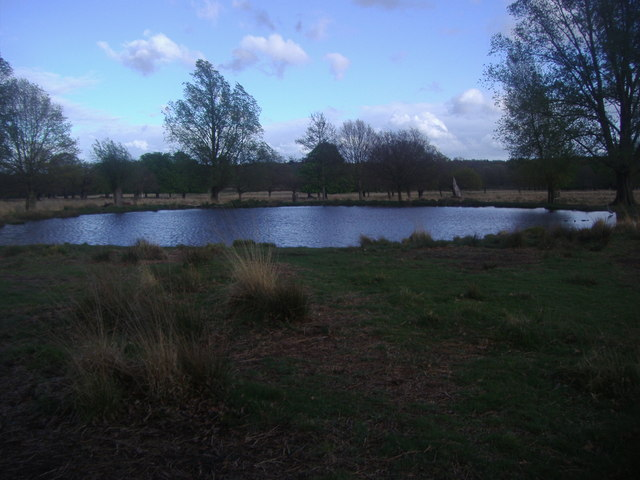 Pond on Richmond Park
