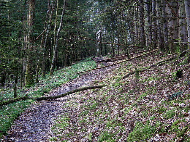 Fallen trees on the path to Devil's Bridge