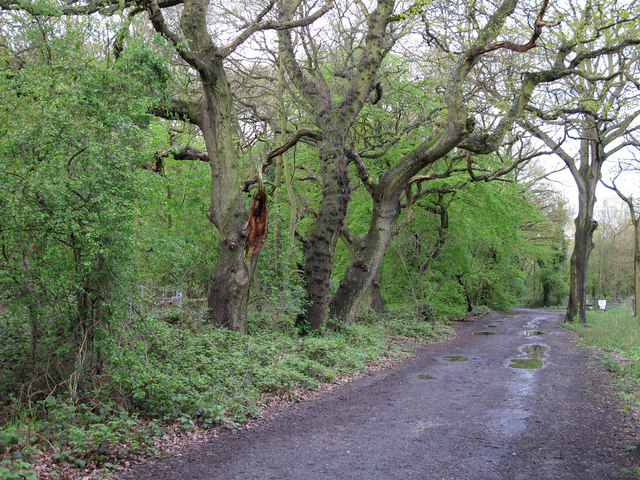Oaks on forest boundary