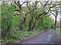 TQ4692 : Oaks on forest boundary by Roger Jones