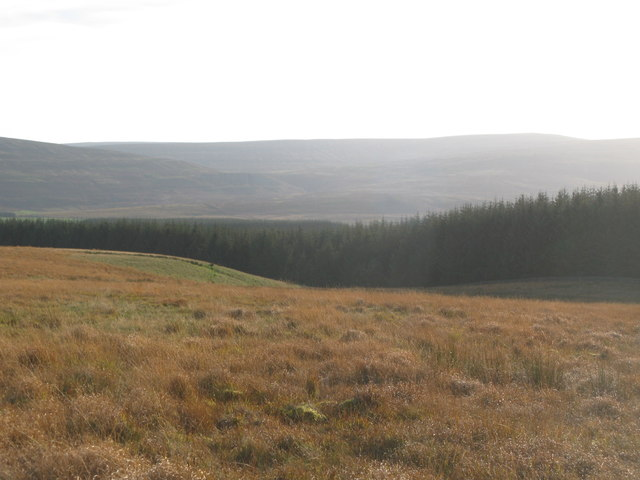 Hartleyburn Common (North Side) and plantation on Low Hill