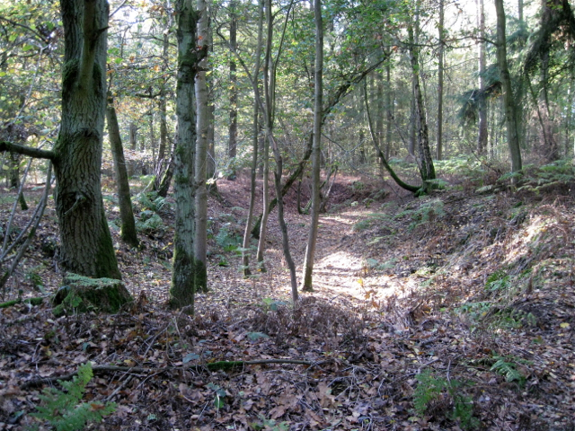 One of the pits in May's Wood