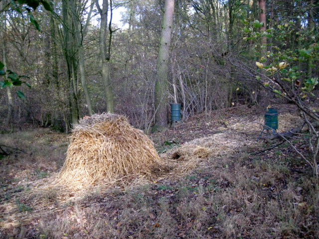 Straw pile and feeders, May's Wood