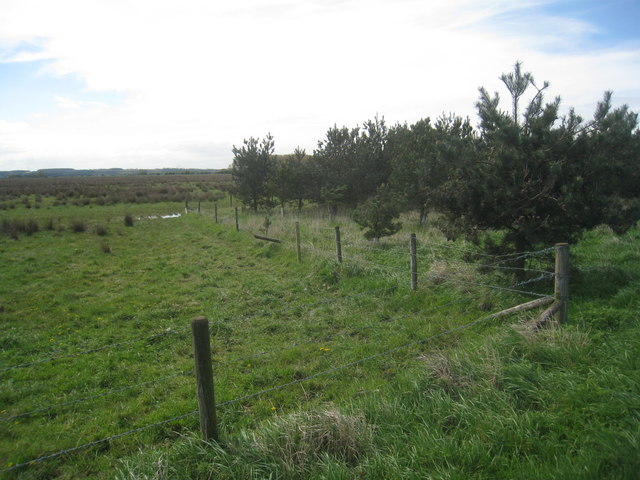Plantation on Worlaby Carrs
