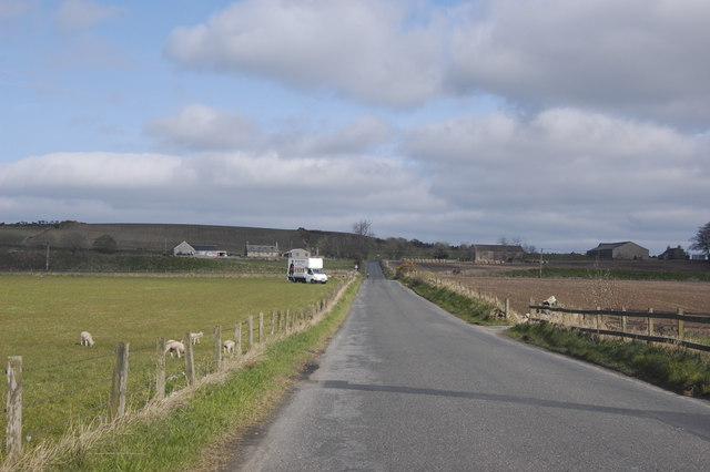Lambs by the roadside...