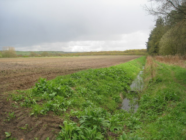 Field by Long Wood