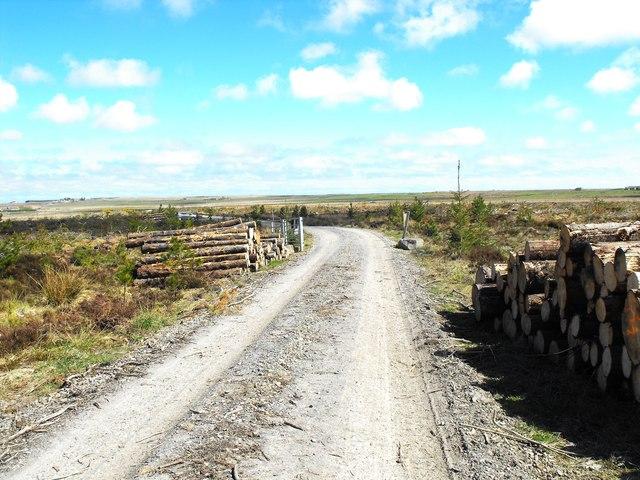 Blingery Wood. Destruction