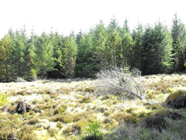Blingery Wood