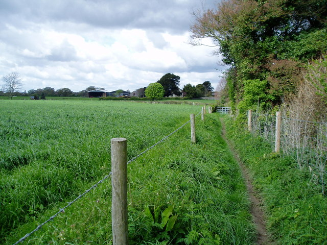 Footpath adjacent to crops