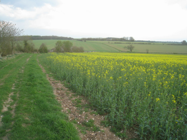 Oilseed rape near Round Wood