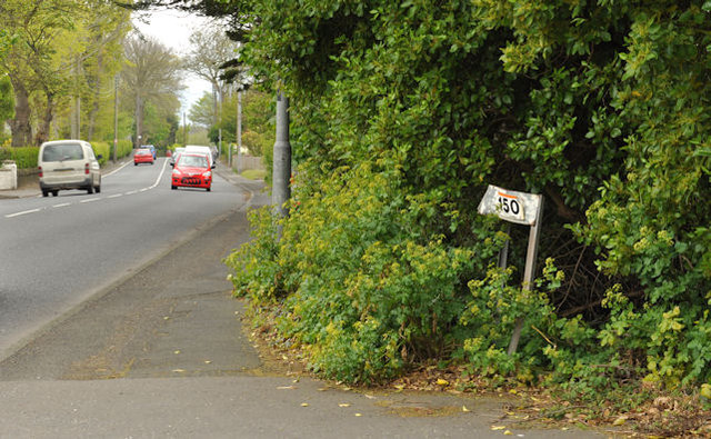 Lane, Greenisland (2)