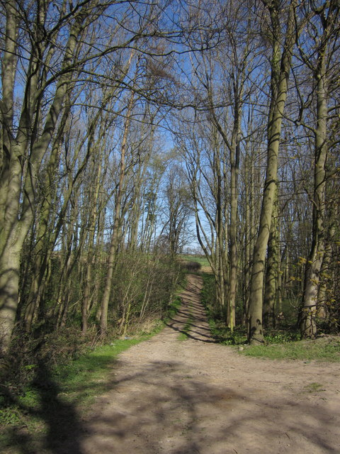 Track through Shrog Wood