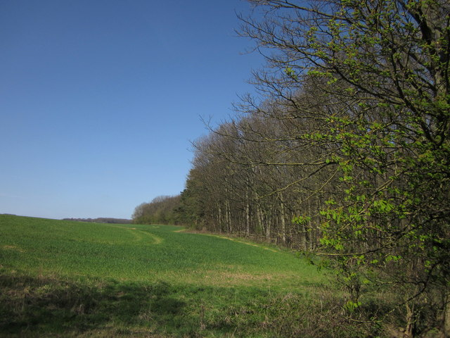 Edge of Shrog Wood