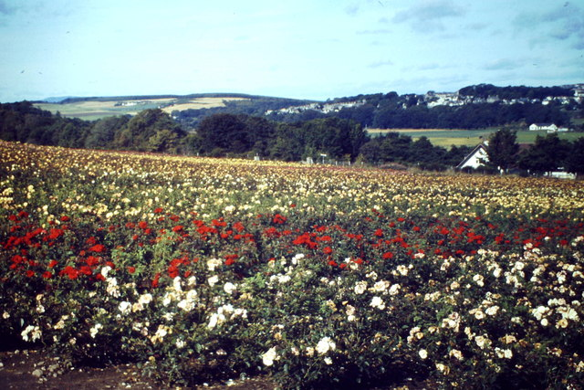 Rose Field, Maryculter