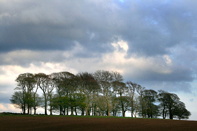 A stand of trees near Newhaven