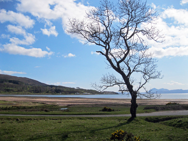 Tree near Applecross Heritage Centre