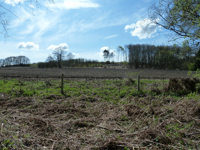 Coppicing in Hilly Fields Copse