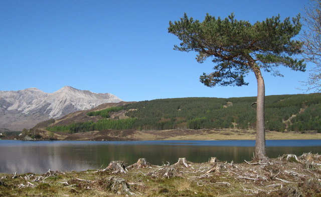 Lone tree on shore of Loch Coulin