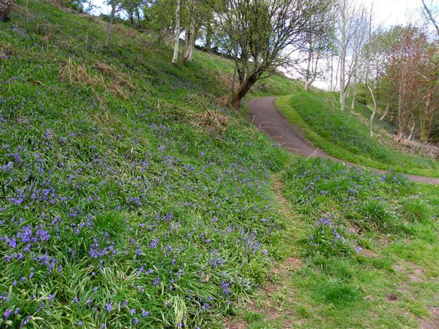 Bluebells, Riverside