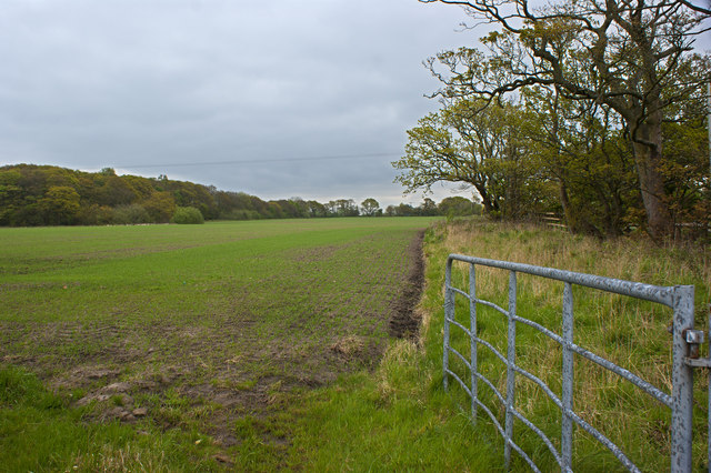 Field boundary - Big Wood in view