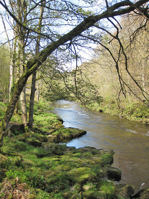 The River Wharfe, upstream view