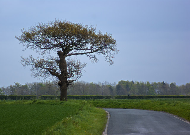 A tree on Bowkers Green Lane