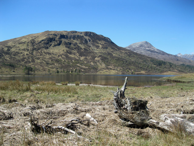 Driftwood at Loch Coulin