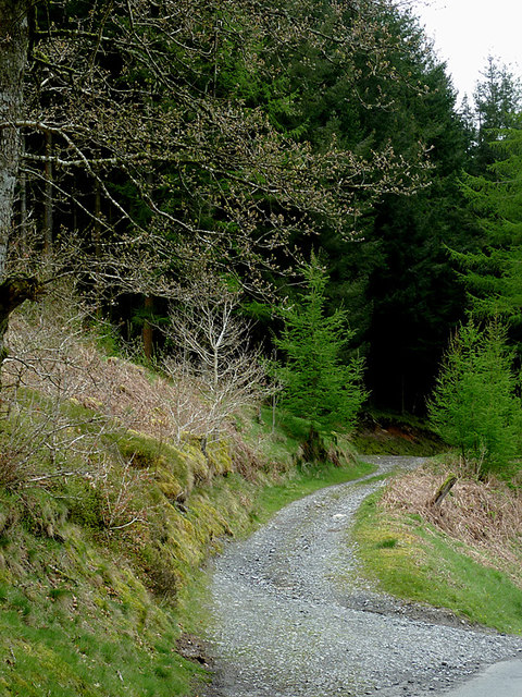 Forestry road north-west of Beulah, Powys