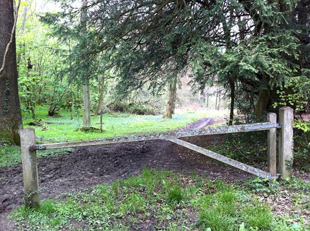 Path to Dorking Wood
