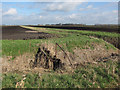 TL6590 : Bridleway across Feltwell Anchor by Hugh Venables