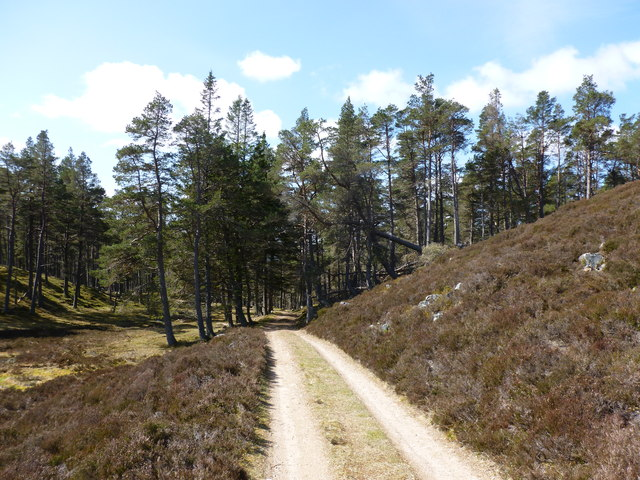 Forest edge, Invercauld